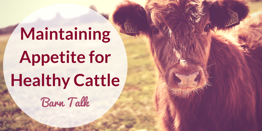 Maintain a Healthy Appetite for Cattle Tips