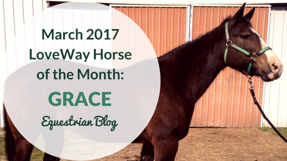 Grace Featured Therapy Horse for March