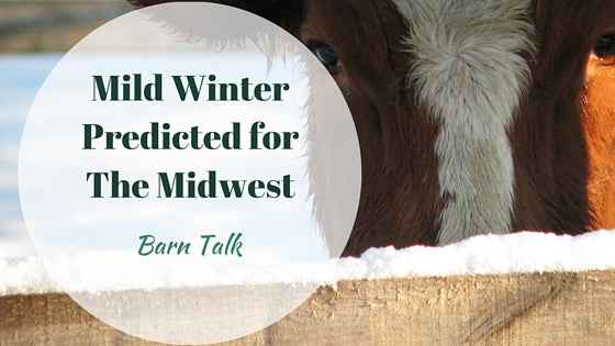 Mild Winter for the Midwest with El Nino
