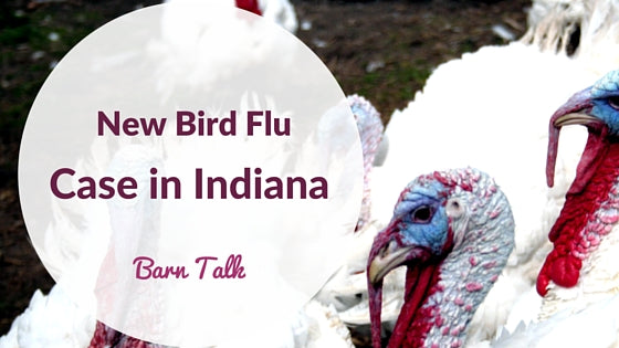 New Bird Flu Diagnosed Case in Indiana