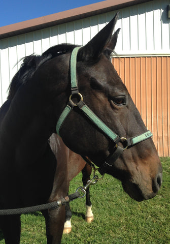 LoveWay Featured Equine Assisted Therapy Horse