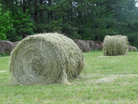 Round Bale Feeding Cattle Hay