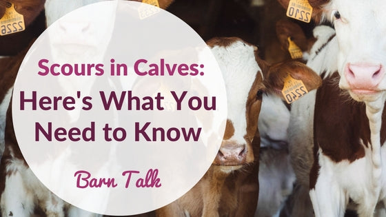 Scours and Calves Here's What You Need to Know