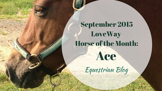 September 2015 Loveway Horse Of The Month Ace Vpsi