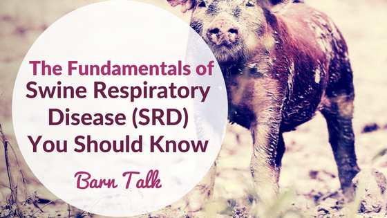 Fundamentals of Swine Respiratory Diseases