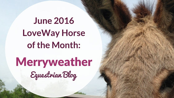 June 2016 Loveway Therapy Horse Of The Month Vpsi