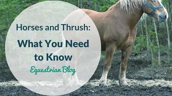 Horses and Thrush: What You Should Know