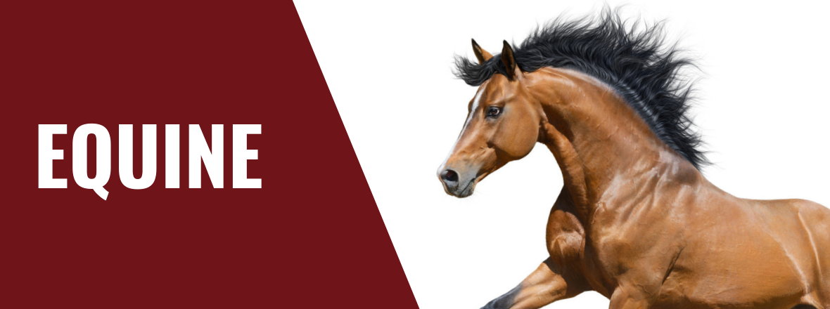 horse-supplies-health-nutrition-supplements