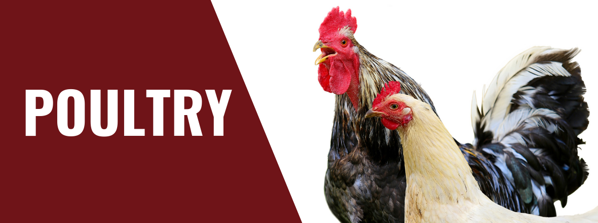 vpsi-poultry-health-supply