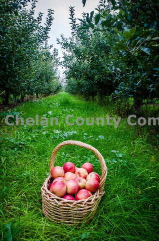 Basket of Wenatchee Apples