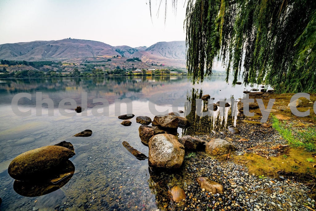 Columbia River Willow Tree , JPG Image Download - Brian Mitchell, Chelan County Commons