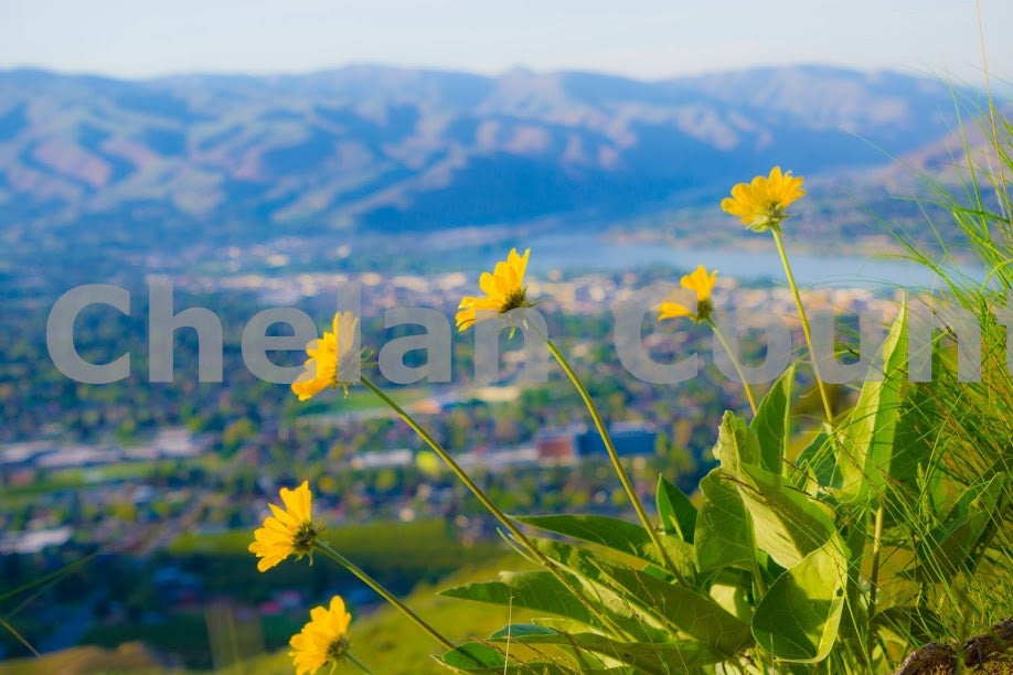 Spring Flowers in Wenatchee Valley