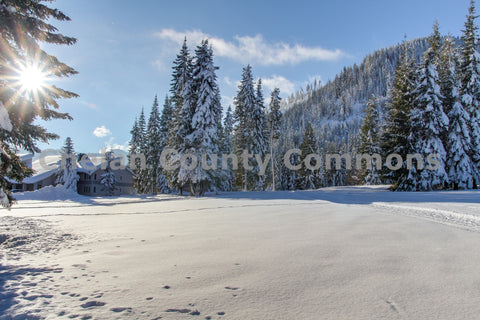 Snow Meadow Field