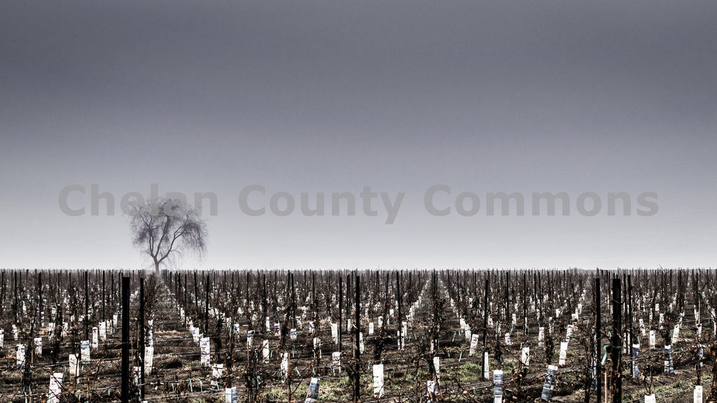 Dormant Winter Vineyards , JPG Image Download - Rob Spradlin, Chelan County Commons