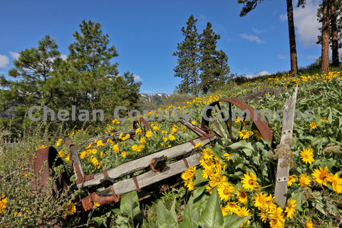 Rusty Wagon Wildflowers