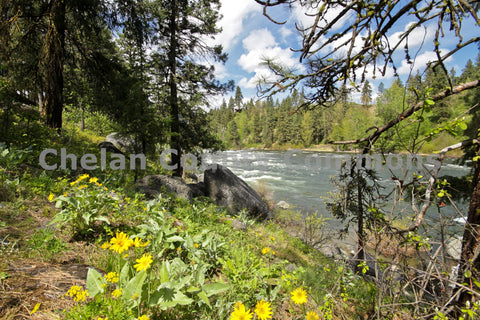 Wenatchee River Spring Flowers