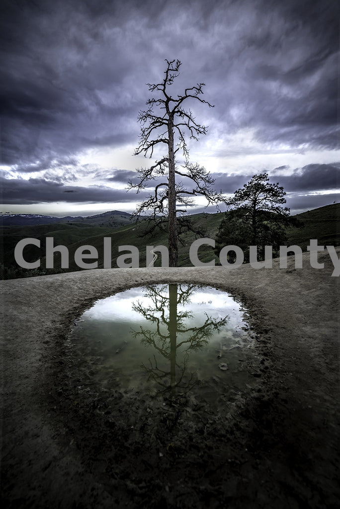 Tree Pond , JPG Image Download - Brian Mitchell, Chelan County Commons