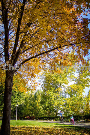Waterfront Park Fall Bike Ride , JPG Image Download - Josh Cadd, Chelan County Commons
