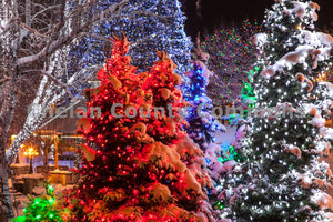 Christmas Tree Lights , JPG Image Download - Travis Knoop, Chelan County Commons