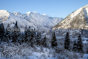 Snow Forest Leavenworth , JPG Image Download - Travis Knoop, Chelan County Commons