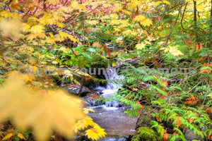 Stream Through Fall Trees , JPG Image Download - Travis Knoop, Chelan County Commons