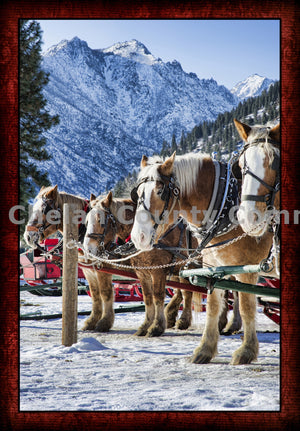 A Winter Horse Sleigh Ride , JPG Image Download - Heidi Swoboda, Chelan County Commons