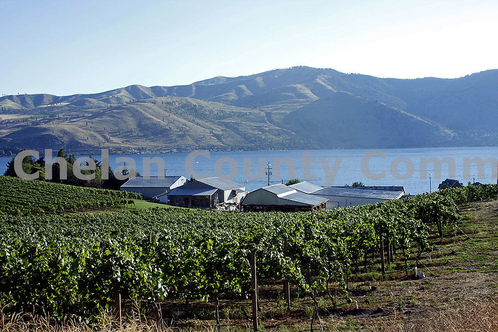 Lake Chelan Grapes , JPG Image Download - Richard Uhlhorn, Chelan County Commons