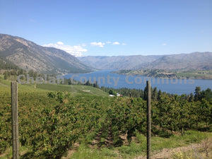 Lake Chelan Hillside Orchard , JPG Image Download - Travis Knoop, Chelan County Commons
