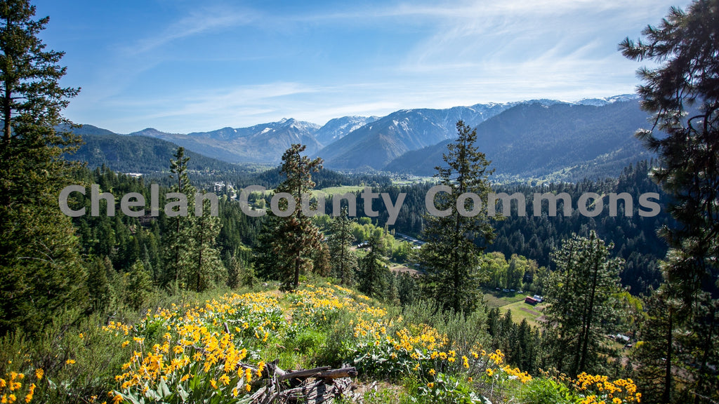 Leavenworth Alpenview Wildflowers , JPG Image Download - Travis Knoop, Chelan County Commons