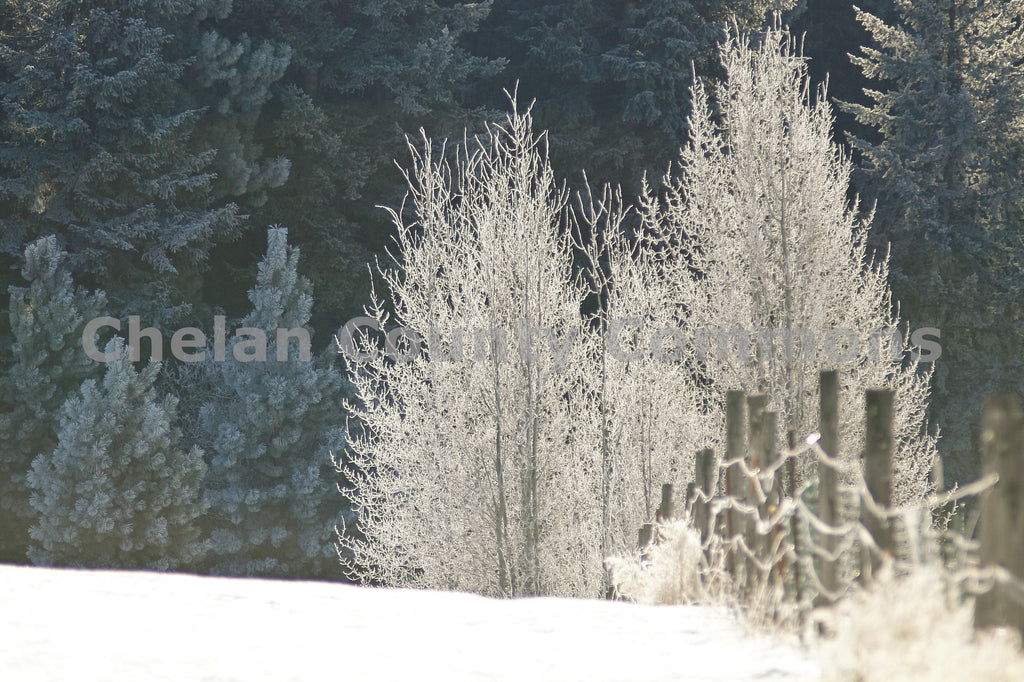 Winter fence-line in Plain , JPG Image Download - Travis Knoop, Chelan County Commons