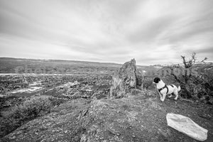 Saddle Rock B&W Dog , JPG Image Download - Brian Mitchell, Chelan County Commons