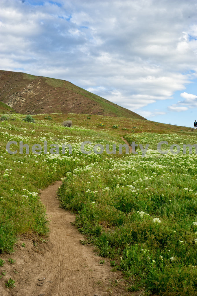 Sage Hills Trails and Flowers , JPG Image Download - Heidi Swoboda, Chelan County Commons