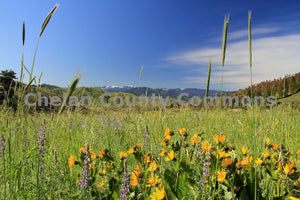Spring Yellow & Purples , JPG Image Download - Travis Knoop, Chelan County Commons