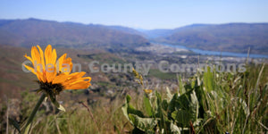 Spring Flower Wenatchee , JPG Image Download - Travis Knoop, Chelan County Commons