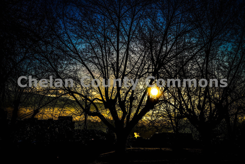 Sunset Trees , JPG Image Download - Brian Mitchell, Chelan County Commons