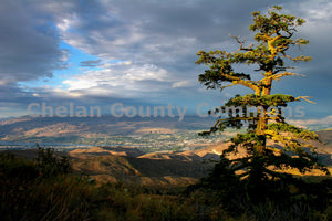 Gnarled Tree Above Wenatchee , JPG Image Download - Travis Knoop, Chelan County Commons