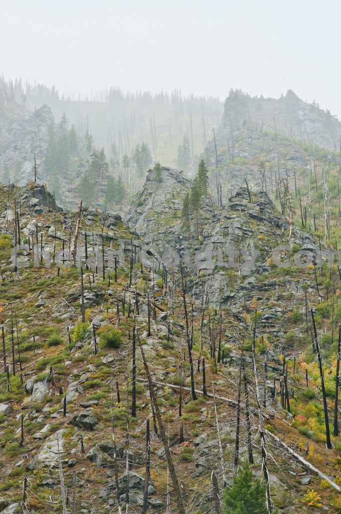 Tumwater Wildfire Remains , JPG Image Download - Heidi Swoboda, Chelan County Commons