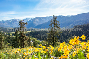 Leavenworth Wildflower Close-up Vista , JPG Image Download - Travis Knoop, Chelan County Commons