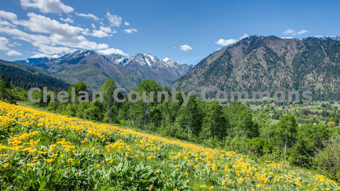 Wildflower Meadow near Leavenworth