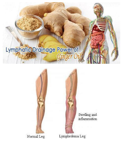 Premium Ginger Oil - Improves Swelling, Joint Pain, Infection