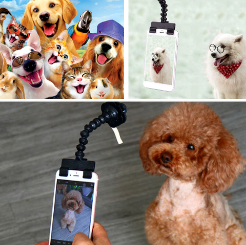 Image of Pet Selfie Stick