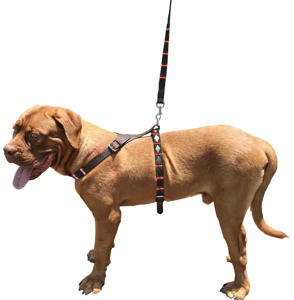CARLOS DIAZ Genuine Leather Waxed Embroidered Polo Dog Matching Easy Control No Pull Back Harness and Lead Set