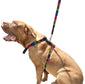 CARLOS DIAZ Genuine Leather Waxed Embroidered Gaucho Polo Dog Matching Easy Control No Pull Harness and Lead Set
