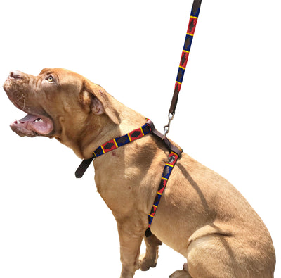 CARLOS DIAZ Genuine Leather Waxed Embroidered Polo Dog Matching Easy Control No Pull Harness and Lead Set