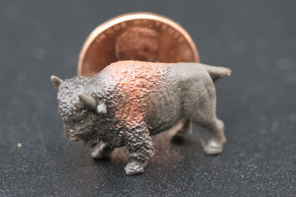 Miniature Buffalo