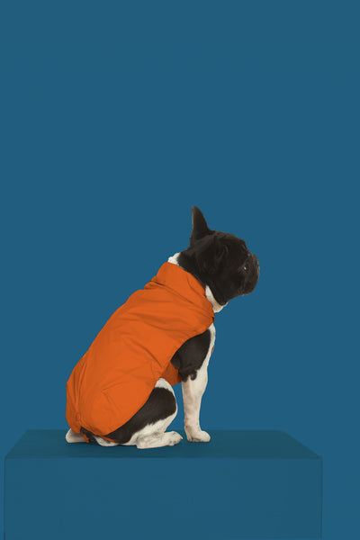 Cruelty Free Dog Jacket