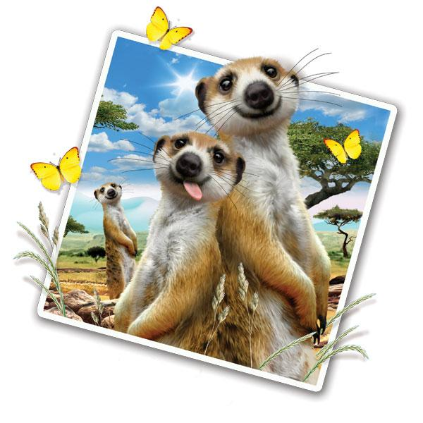"Meerkat Selfie 12"" Wall Slaps Decal"