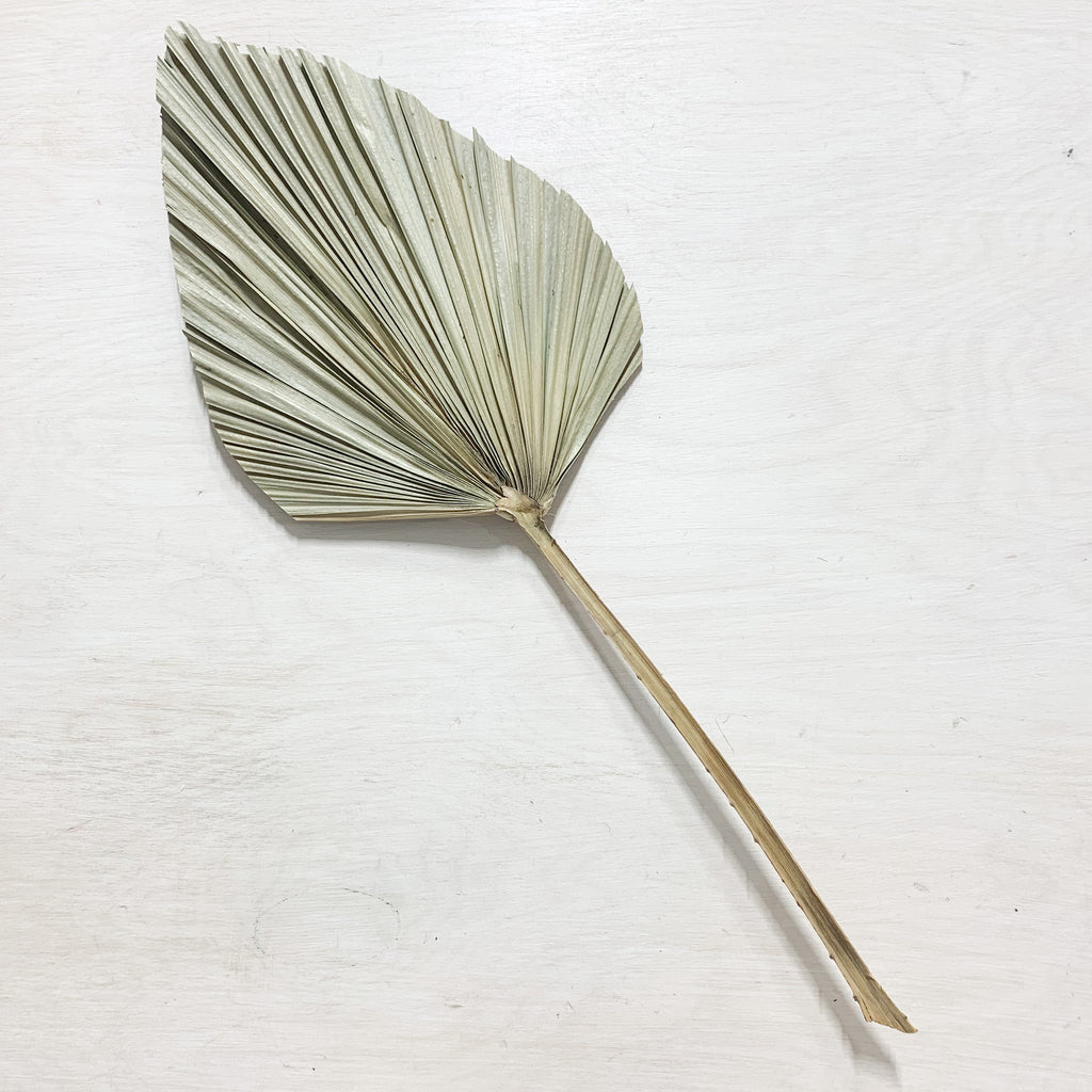Dried Spear Palm Leaf - Large