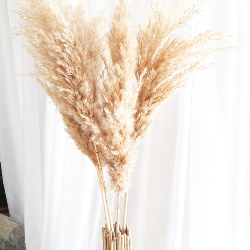 Dried Pampas Grass Stem - Large
