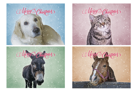 ISPCA Christmas Cards - Special Offer €5 per pack